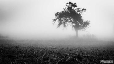 Schwarz-Weiß Fotografie